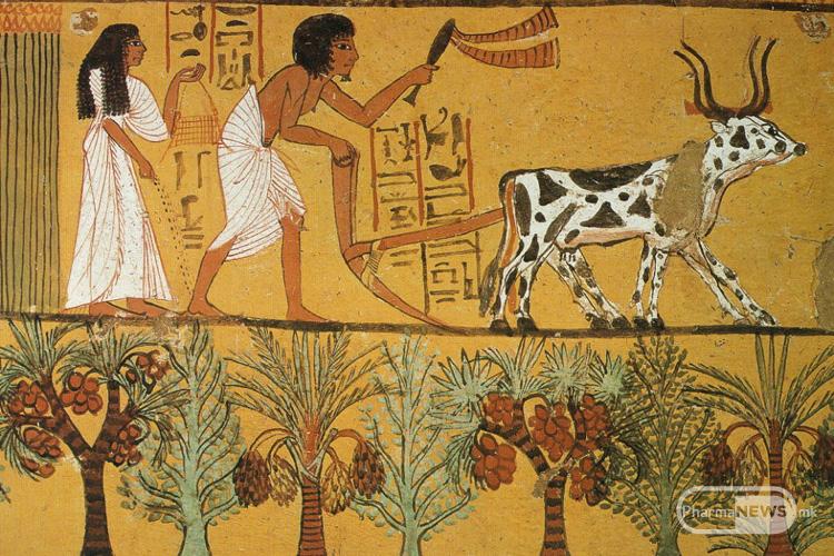 1_hranata niz istorijata_egyptian_plow
