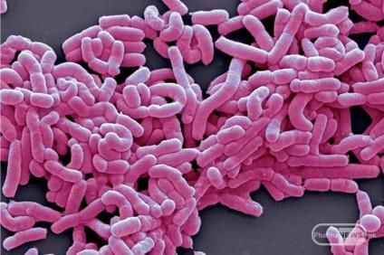 bifidobacterium-i-lactobacillus-dobri-bakterii-vo-mikroflorata-angelco-jovancev