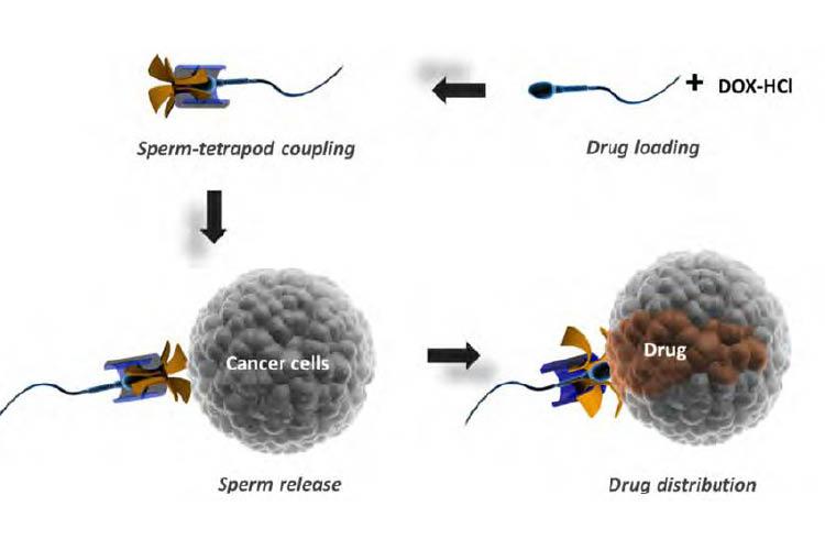 spermatozoidite-novo-oruzhje-za-borba-protiv-rak_image1