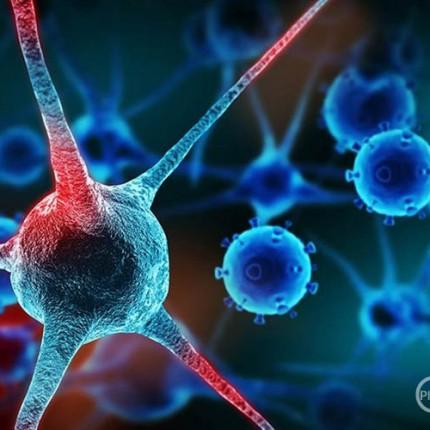 so-imunoterapija-vo-borba-protiv-rakot_image