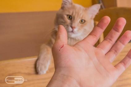felinoza-bolest-na-grebanica-od-machka_image