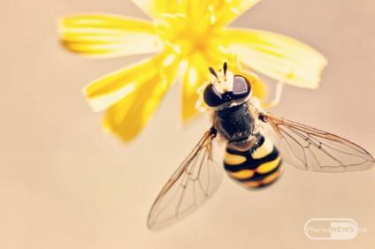 alergija-na-ubod-od-pchela-shto-treba-da-znaete_image