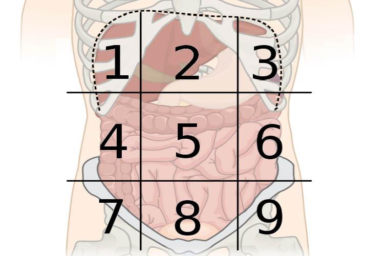 otkrijte-za-koj-organ-stanuva-zbor-spored-toa-kade-e-locirana-vashata-bolka-vo-stomakot_image
